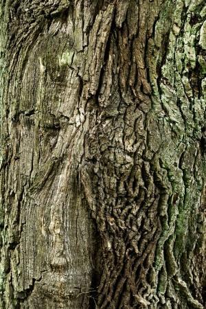 dry tree bark texture background