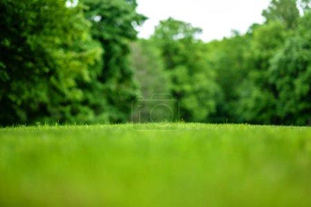 Photo pour Une vue magnifique sur une pelouse fauchée dans le fond d'un parc arboré. Tout sauf une étroite bande d'herbe au milieu de l'image floue. - image libre de droit