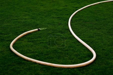 Hose for watering the grass in a sunny dry day. Water pours on the lawn.