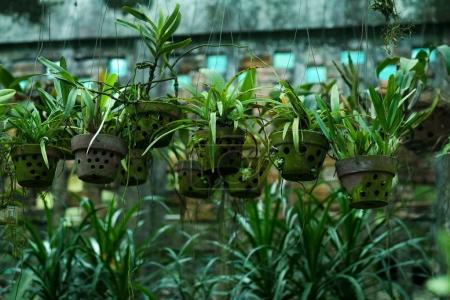 Flowers pots in greenhouse.