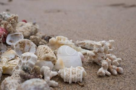 Different shells on sandy beach in summer. Concept of good vacation