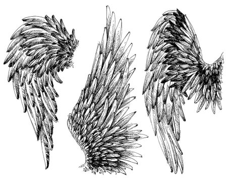 Wings drawings set