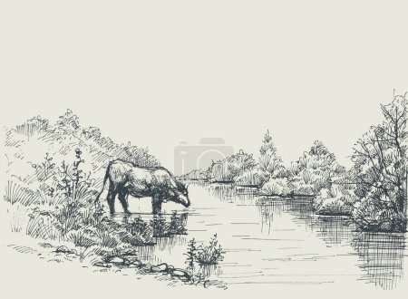 Illustration for Cow drinking water at the river shore. Graphic landscape, artistic background - Royalty Free Image