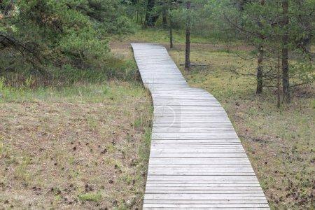 Photo pour Sentier écologique en bois dans la forêt de pins en Lituanie - image libre de droit