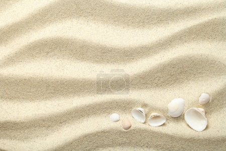Photo for Sand background with shells. Beach texture. Copy space. Top view - Royalty Free Image