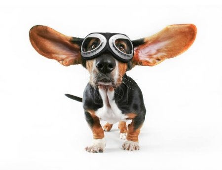 a basset hound with his ears flying away wearing goggles