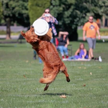Dog having fun at a public park on a hot summer da...