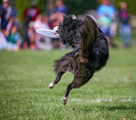 dog having fun at a public park