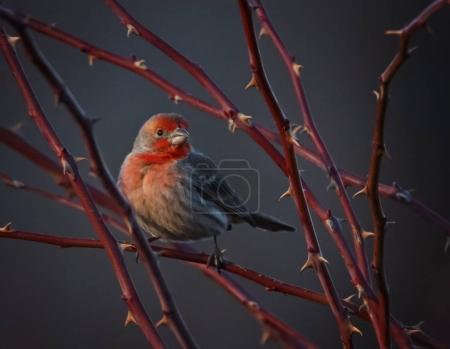 Beautiful bird photo in a natural environment