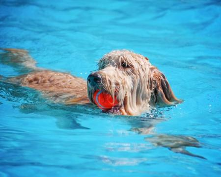 cute dog swimming in a public pool