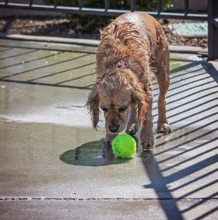 cute dog swimming in a public pool