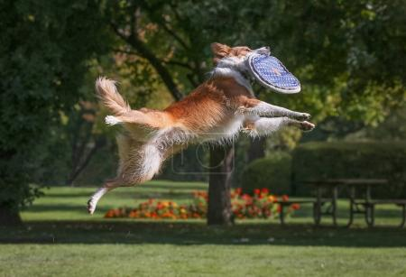 a dog playing fetch in a local public park