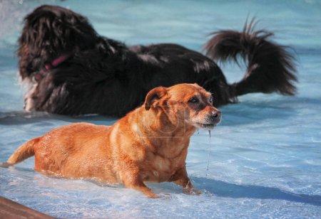 cute dogs  in a public pool