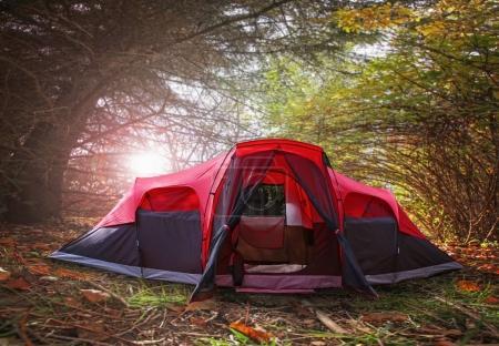 Photo pour Un grand arbre plein de feuilles prêtes à tomber un jour d'automne lumineux dans un cadre naturel avec le soleil derrière et une tente devant - image libre de droit