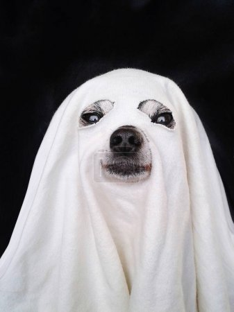 chihuahua dressed up like a ghost