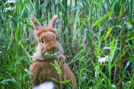 cute rabbit eating a daisy at a local wildlife sanctuary park in a city