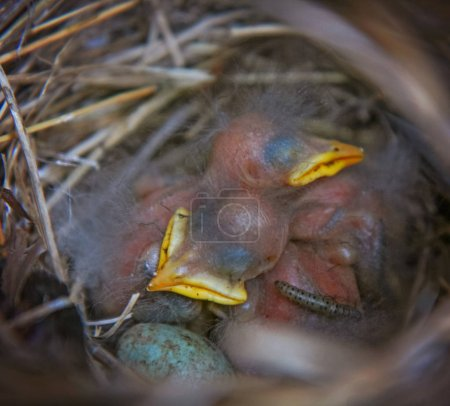 nest with baby sparrows, an egg with spots and a grub or caterpillar like insect crawling on a baby bird
