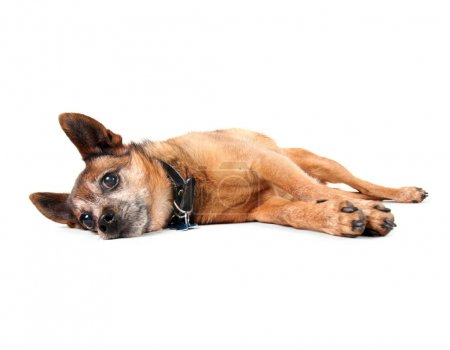 dog laying down on his side