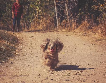 authentic candid photo of a cute long haired isabella colored dachshund with his owner wearing brown leather boots and jeans on a path out in nature toned with a warm retro vintage instagram filter