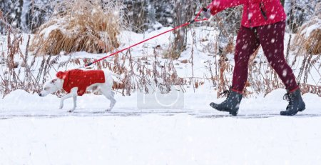 Beautiful photo of a dog walking on a leash outside in the snow with its owner on a cold winter day