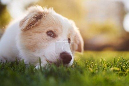 puppy lying down on green grass