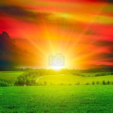 Photo pour Beau coucher de soleil sur champ vert - image libre de droit