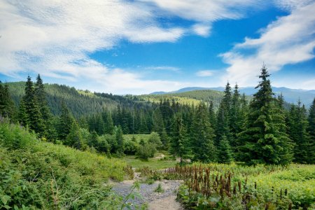 Photo for Picturesque landscape in Carpathians. Coniferous forest on background of high mountains. - Royalty Free Image