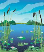 Illustration swamp lily
