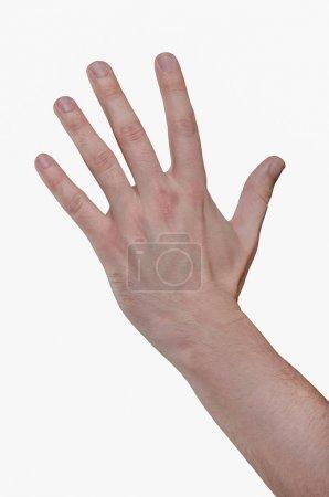 Photo pour Homme isolé à la main sur fond blanc. Cinq doigts, paume dépliée - image libre de droit