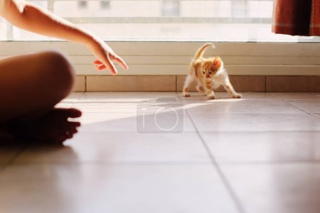 red kitten cat indoots