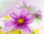 Květina krásný design