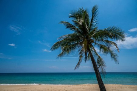 Photo for Palm tree on the beautiful tropical sandy beach over blue sea and sky background - Royalty Free Image