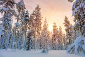 Beautiful Winter Sundown in Northern Forest