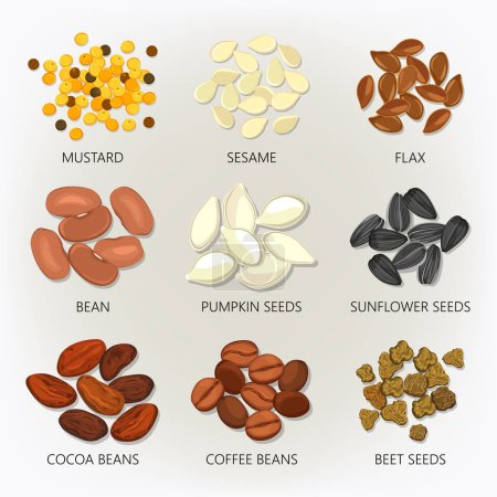 Illustration for Seed and bean, grain isolated icons. Mustard and sesame, flax and pumpkin kernel , sunflower peel and cocoa, coffee and beet cellulose. Herb and seasoning, farming and agronomy, vegetable and botany - Royalty Free Image