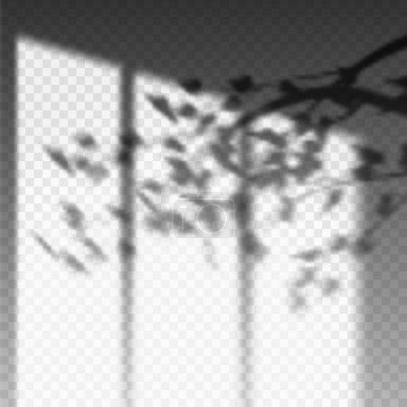 Illustration pour Plantez une branche ou une ombre sur un mur transparent. La fenêtre et les feuilles recouvrent les effets d'ombre. Mockup de feuillage de la flore. Ombre floue ou mise en page photo réaliste. Réflexion lumière toile de fond . - image libre de droit