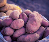 Red potatoes at a market