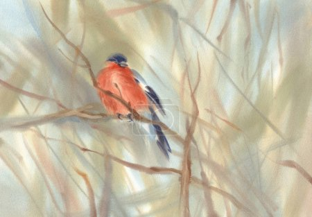 little bird red bullfinch on the branch watercolor background
