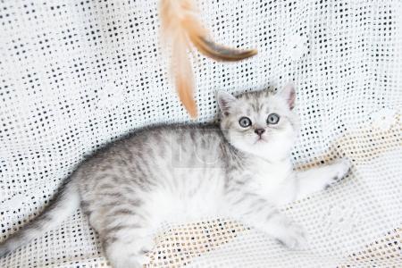 Muzzle of a small kitten