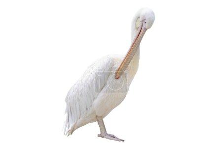 Pelican photo isolation