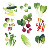 Clip art vegetable collection of zucchini Brussel sprouts bokchoy lettuce leaves beetroot rhubarb celery napa cabbage and collard greens