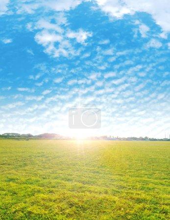 Summer shot of a fresh, green meadow