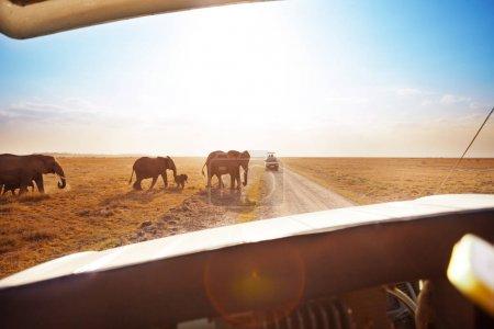 Photo pour Tourisme en jeep safari regardant les éléphants traverser la route familiale dans le parc national d'Amboseli, Kenya - image libre de droit