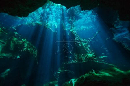 Photo for Beautiful underwater world of Azul cenote of Quintana roo in Mexico - Royalty Free Image