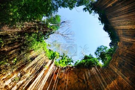 Ik-Kil cenote with hanging roots