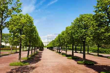 Converging rows of trees of Upper Gardens in Petrodvorets, Peterhof, Russia