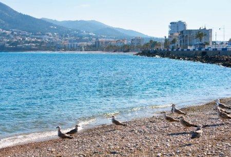 Seagulls on the pebble beach of Altea. Spain