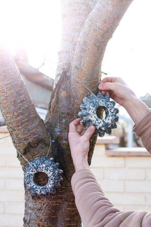 Photo pour Un homme suspend des guirlandes de graines pour nourrir les oiseaux sur un arbre - image libre de droit