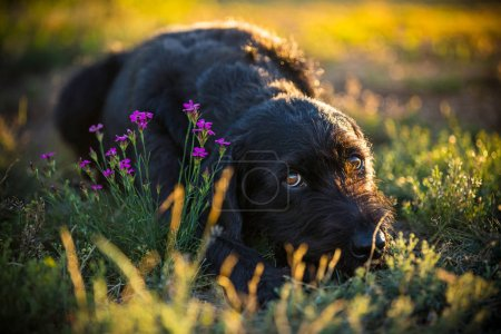 Cute black mutt dog on spring meadow.