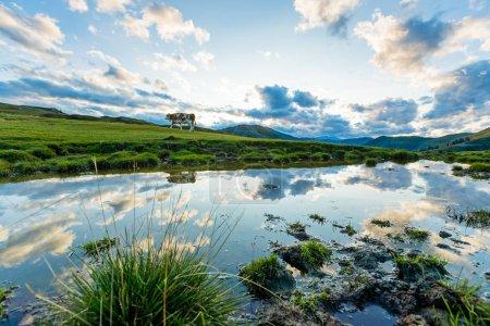 Photo pour Coucher de soleil spectaculaire et pittoresque avec vache en Autriche Alpes, Europe. - image libre de droit