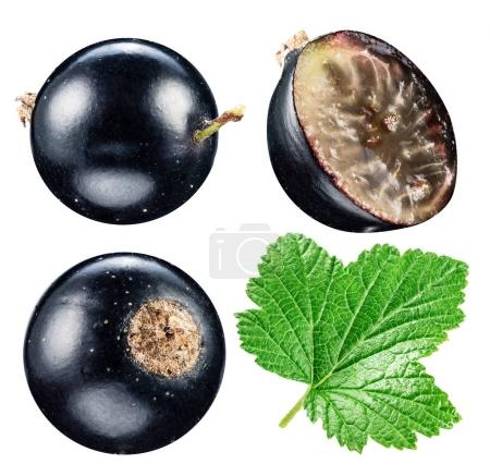 Black currants. File contains clipping paths.